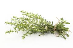 Summer Savory , Satureja Hortensis, Isolated on White Stock Images