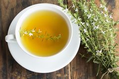 Summer Savory , Satureja Hortensis, Tea.  royalty free stock photos