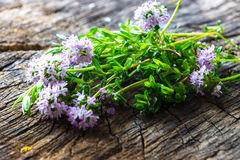 Summer savory (Satureja hortensis). On wooden background royalty free stock image