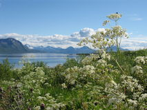 Beautiful sunny day in northern Norway Royalty Free Stock Images