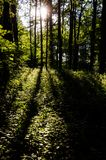 Summer scene with lush greenery, sun and shadows. Spinney lit by sunbeams with long shadows of trees in thicket Royalty Free Stock Images
