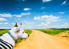 Summer scene. Road going to skyline and dog ready for adventure Royalty Free Stock Image