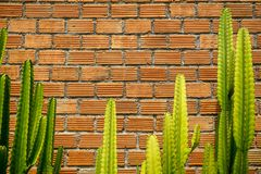 Summer scene of rough orange brick texture pattern wall and grey mortar background with fresh bright green cactus desert plant Royalty Free Stock Images