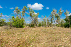 Summer scene in steppe Royalty Free Stock Photo