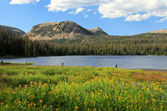 Summer scene in the Uinta mountains. Stock Images