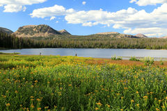 Summer scene in the Uinta mountains. Royalty Free Stock Images