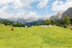 Summer scenery of a beautiful ranch in a grassy valley in Dolomites with cattle grazing on green meadows stock image