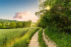 Summer scenery. The deciduous forest and rural road on a warm evening.  royalty free stock photography