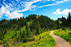 Summer scenery, Olympic National Park Stock Image