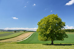 Summer scenery, Switzerland Stock Images