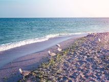 Summer sea background. Royalty Free Stock Photography