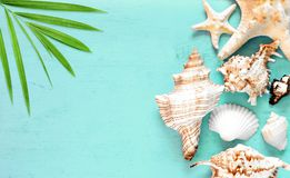 Summer sea background - seashells on blue wooden background stock photo