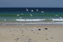 Summer Sea Birds Royalty Free Stock Image