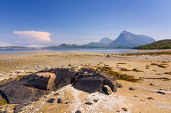 Summer sea coast in Norway Royalty Free Stock Image