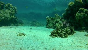 Summer, sea, coral reef,  Beautiful exotic fish. stock footage
