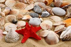 Summer sea shells in the yellow sand Royalty Free Stock Photos