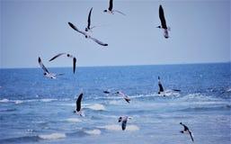 Summer of seagulls !!! Stock Photos