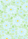 Summer seamless background with camomile Royalty Free Stock Photos