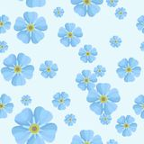 Summer seamless pattern with blue forget-me-nots Royalty Free Stock Photography