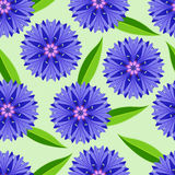 Summer seamless pattern with cornflowers Royalty Free Stock Image