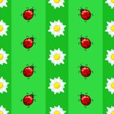 Summer seamless pattern with daisies and ladybugs on striped background. EPS 10 Stock Image