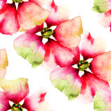 Summer seamless pattern with flowers Stock Photography