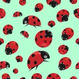 Summer seamless pattern with ladybirds Royalty Free Stock Image