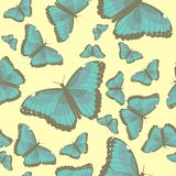 Summer seamless pattern with turquoise butterflies Royalty Free Stock Images