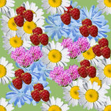 Summer seamless pattern of wild flowers and raspberries Royalty Free Stock Photography
