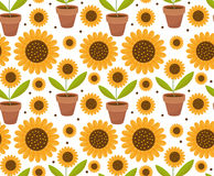 Summer seamless pattern with yellow sunflower flowers. Village endless background, repeating texture. Vector. Summer seamless pattern with yellow sunflower Stock Photo
