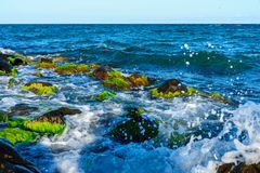 Summer seascape. Sea surf, waves. Royalty Free Stock Images