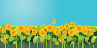 Summer season, nature picture, field of sunflowers under blue. Sky Stock Images