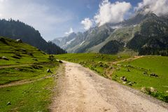 Summer season in Sonamarg in a morning, Jammu Kashmir, India. Asia royalty free stock images