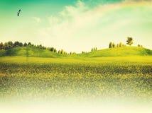 Summer seasonal backgrounds Stock Image