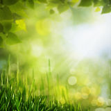 Summer seasonal backgrounds Royalty Free Stock Images