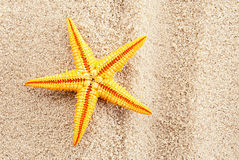 Summer seastar. Royalty Free Stock Photo