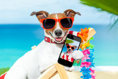 Summer selfie dog Stock Photography
