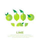 Summer set of lime fruits. Stock Image