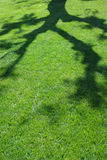 Summer Shade. Lush summer lawn splashed with the shade of tree branches stock photo