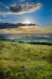 Summer Sheep on a Welsh Hilltop Royalty Free Stock Photo
