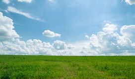Summer shining meadow with blue sky and fluffy clouds. Summer shining meadow. Feel of real sunlight. Bright blue sky, white fluffy clouds and green meadow Stock Photos