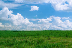 Summer shining meadow with blue sky and fluffy clouds Royalty Free Stock Photography