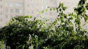 Summer shower. Summer rainfall in the city stock video footage