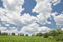 Summer Skies Stock Image