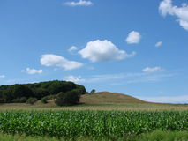 Summer sky & crops. Blue sky and clouds above green hills, pasture and crop of corn Royalty Free Stock Photo
