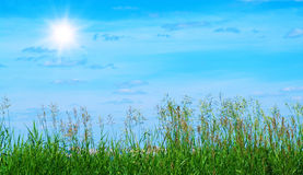 Summer sky and grass Stock Photo