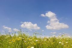 Summer sky and meadow Stock Images