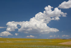 Summer Sky Over Mustard Field Stock Images