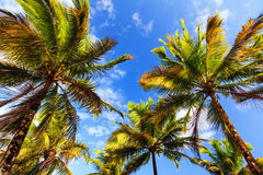 Summer sky palms Stock Photo