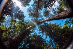 View of summer sky through trees crowns. Summer sky through trees crowns Royalty Free Stock Images